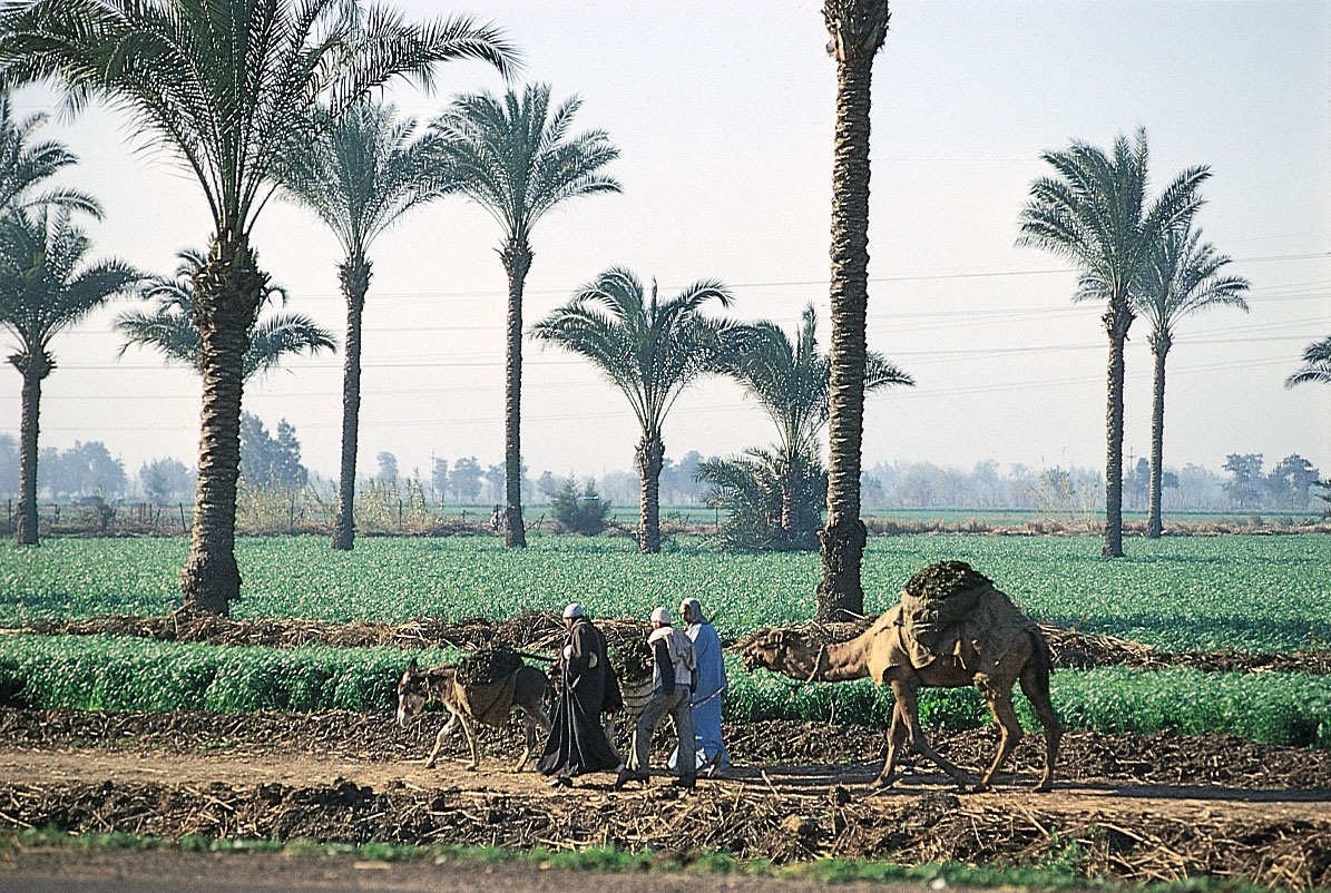 52 Rural Areas in Egypt to Receive Optical Fiber Networks Within the Next 18 Months